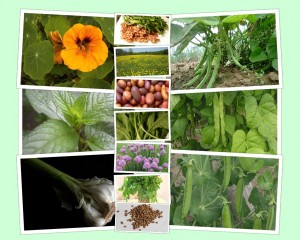 10 Easy Crops to Grow